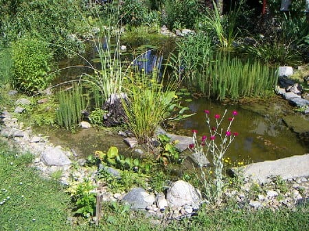 Teich Bepflanzung Das Garten Lexikon Der Pflanzenfamilien Von