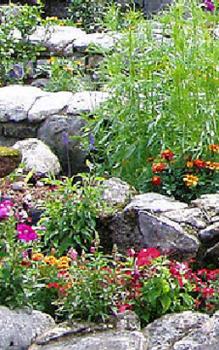 Steingärten Anlegen Das Garten Lexikon Der Pflanzenfamilien Von