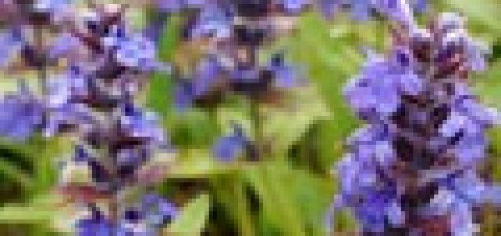 kr uter richtig aufbewahren das garten lexikon der pflanzenfamilien von floristik24. Black Bedroom Furniture Sets. Home Design Ideas