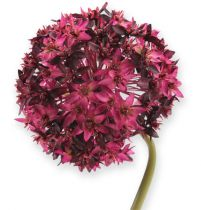 Allium Bordo/Pink 79cm