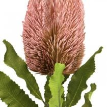 Kunstblume Banksia Rosa Herbstdeko Gedenkfloristik 64cm