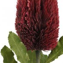 Kunstblume Banksia Rot Burgund Künstliche Exoten 64cm
