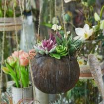Blumenampel mit künstlichen Sukkulenten L65cm Ø16cm