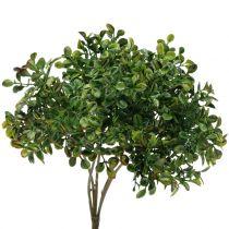Buchsbaum Zweig Grün 27cm