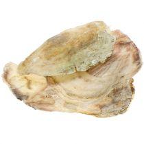Capiz-Muscheln Natur 10cm – 14cm 1kg