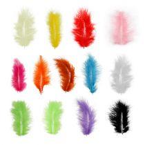 Federn kurz 30g verschiedene Farben