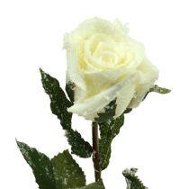 Deko Rose weiß beschneit Ø6cm 6St