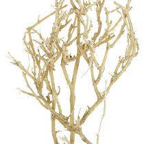 Dry Tree 500g gebleicht