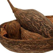 Baobab Früchte Mix mit Schale 300g