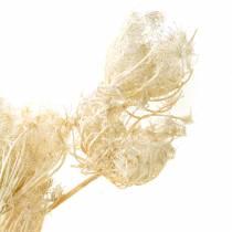 Trockenblumen Fenchel Gebleicht 100g