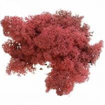 Deko-Moos Rot Bordeaux Islandmoos zum Dekorieren und Basteln 500g