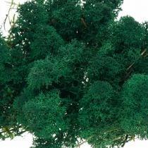 Deko-Moos Grün Islandmoos konserviert Moos zum Basteln 400g