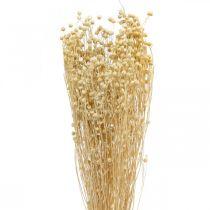 Flachs gebleicht Trockenfloristik Trockengräser 100g