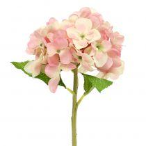 Hortensie Rosa, Creme 36cm