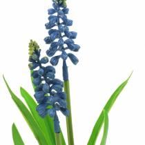 Traubenhyazinthe im Birkentopf Blau 24cm
