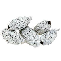Kakaofrüchte weißgewaschen 15St
