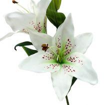 Lilie Weiß 66cm