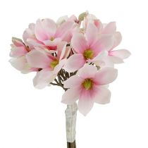 Magnolienbund Rosa 40cm 5St