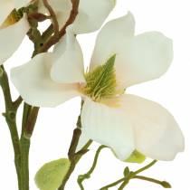 Magnolie Pfirsich 85cm