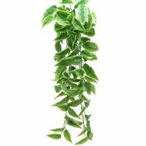 Weißrand-Funkie künstlich Grün, Weiß 100cm