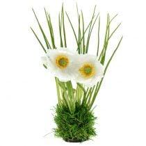 Mohn Weiß im Gras 23cm