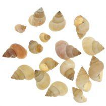 Schneckenmuscheln Natur 1kg