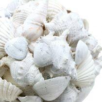 Muschelkugel Weiß Ø10cm