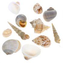 Muschelmix Natur 500g