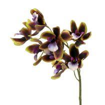 Orchidee Cymbidium Grün, Lila L38cm 4St