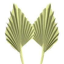 Palmspear Apfelgrün weißgewaschen 65St