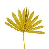 Palmspear Sun mini Gelb 50St