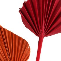 Palmspear sortiert Rot/Orange 50St