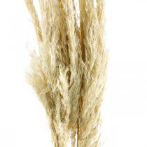 Pampasgras getrocknet Gebleicht 75cm Für Trockenstrauß Bund mit 10St