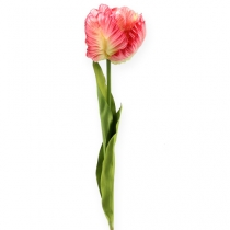 Papagei-Tulpe Pink 72cm 3St.