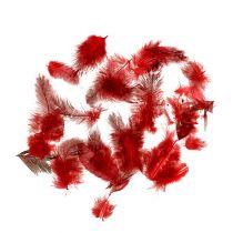 Perlhuhnfedern Faraona 30g Rot