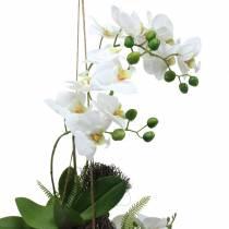 Orchidee mit Farn und Moosballen künstlich Weiß Hängend 64cm