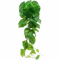 Philodendron Hänger 110cm