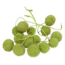 Platanen Früchte Grün 200g