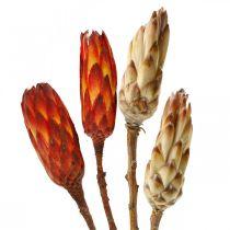 Protea Mix, Trockenblumen Respens Natur/Rot 13St