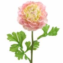 Ranunkel Rosa H45cm