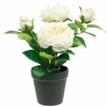 Pfingstrose im Topf, Romantische Deko-Rose, Seidenblume Cremeweiß