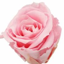 Ewige Rosen Medium Ø4-4,5cm Rosa 8St