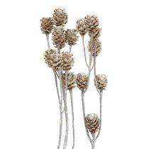 Salignum weißgewaschen 25St