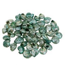 Schneckenmuschel Blau-Grün 500g