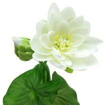 Seerose Weiß 75cm