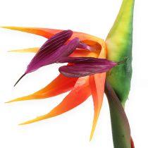 Strelitzie Paradiesvogelblume 62cm
