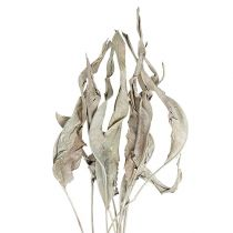 Deko-Blätter Strelitzienblätter weißgewaschen 120cm 20St