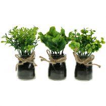 Pflanze Im Glas 15cm 3st Preiswert Online Kaufen