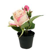 Tischdeko Rose im Topf Creme 14cm