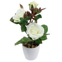 Tischdeko Rose im Topf Weiß 24cm